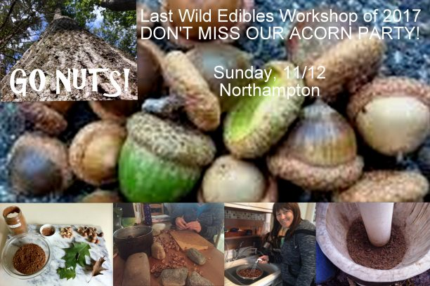 wild edibles acorn processing fall