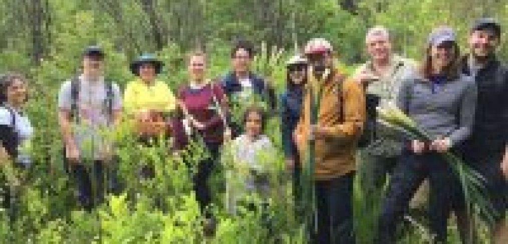 wild edibles & medicinals western ma