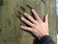 Bear Claws on Beech 7