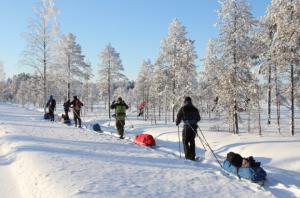 winter sled pulling