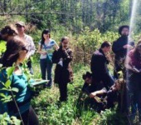 wild edibles & medicinals wilderness skills